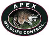 Apex Wildlife Control Memphis TN